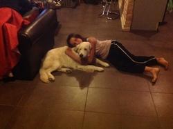 Fundy, chien Golden Retriever