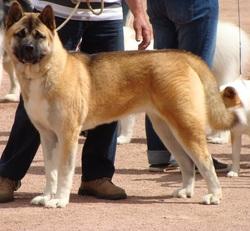 Furka Pretty Princess, chien