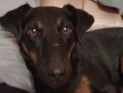 Fuschia, chien Jagdterrier