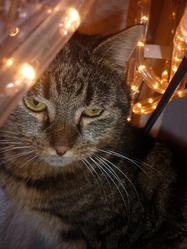 Fuschia, chat Gouttière