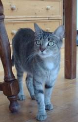 Fyby, chat Gouttière