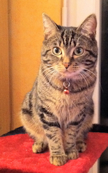 Gaara, chat Gouttière
