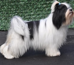 Gabana-Dekyi De Ling Dechen, chien