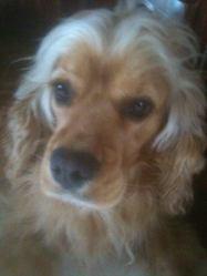 Gabi, chien