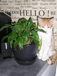 Gadjo, chat Gouttière