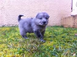 Gadjo, chien