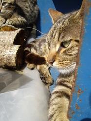 Gadouille, chat