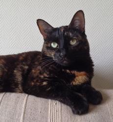 Gaia, chat Gouttière
