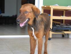 Gaia, chien