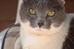 Gala, chat Gouttière