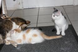 Galak, chat Gouttière