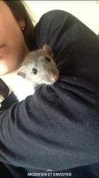 Galaxy, rongeur Rat