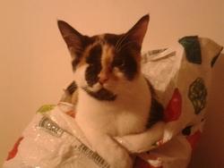 Galie, chat