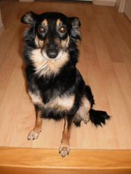 Galinette, chien