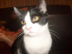 Galipette, chat Gouttière