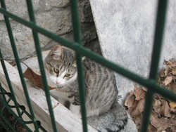 Galleta, chat