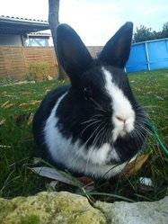 Galy, rongeur Lapin