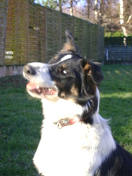 Galyna Dite Galy, chien Border Collie