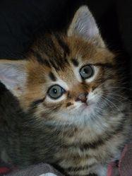 Galyss, chat Gouttière