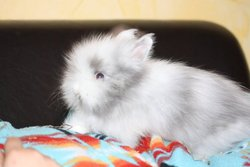 Gamelle, rongeur Lapin
