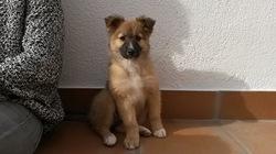 Gamma, chien