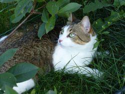 Gandalf, chat Gouttière