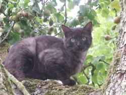 Gandi, chat Gouttière