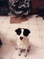 Gandja, chien