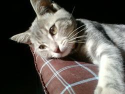 Ganja Rip, chat Gouttière