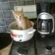 Garfield, chat Européen