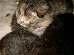 Garfield, chat Gouttière