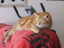 Garfield, chat