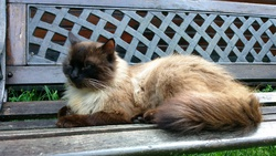 Garou, chat