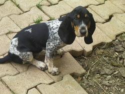 Garrigue, chien