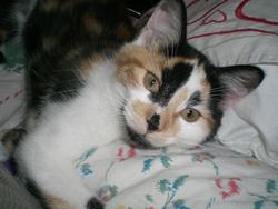 Gasoil, chat Gouttière