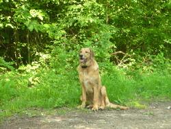 Gaspard, chien