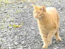 Gaspard, chat Gouttière