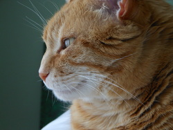 Gaston, chat Gouttière