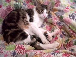 Gato, chat