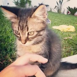 Gatsby, chat Gouttière
