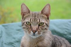 Gauffrette, chat Gouttière