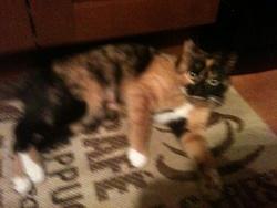 Gaufrette, chat