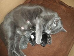 Gaufrette , chat