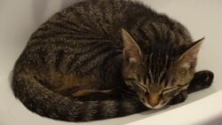 Gaya, chat Gouttière