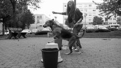Gazelle, chien Labrador Retriever