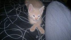 Gazpacho, chat Gouttière
