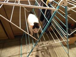Gélon, chat Gouttière