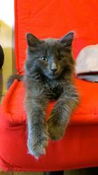 Gene, chat Gouttière