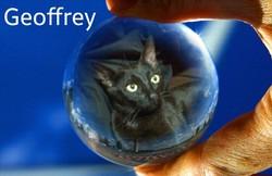 Geoffrey, chat Mau Egyptien