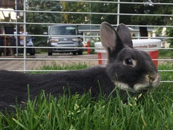 George, rongeur Lapin